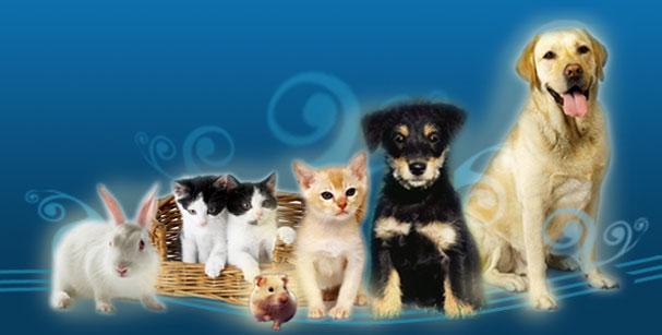 Cursos sobre Mascotas Animales Perros Caballos Gatos Adiestramiento Cuidados Aves Peces
