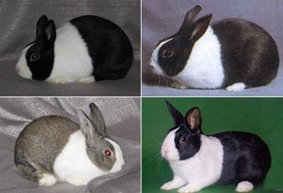 Curso Gratis Aula Virtual Cunicultura Conejo