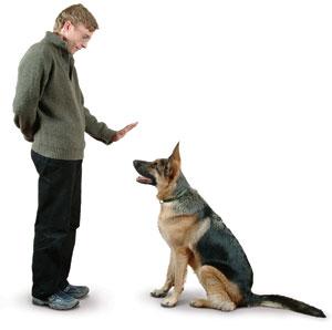 Aula Virtual con Curso Gratis de Adiestramiento de Perros