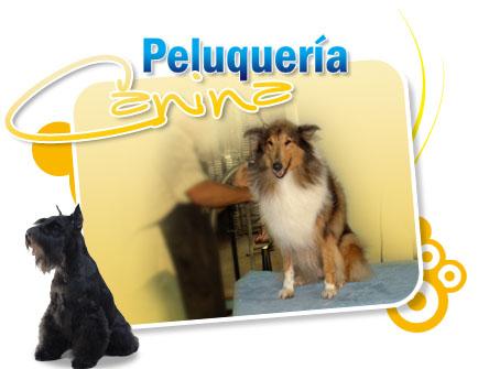 Aula Virtual Curso Gratis Peluqueria Canina Perros