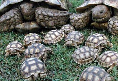 Curso-Crianza-Salud-Cuidados-de-Tortugas