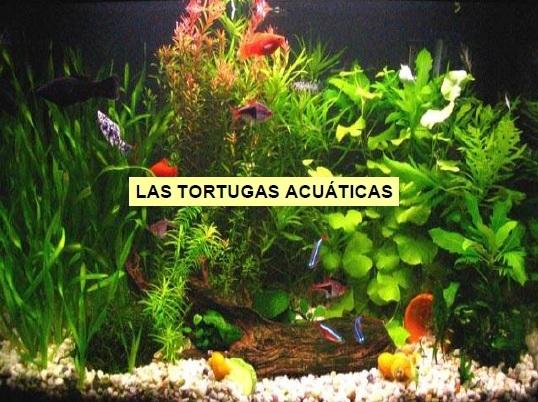 Tortugas Acuaticas
