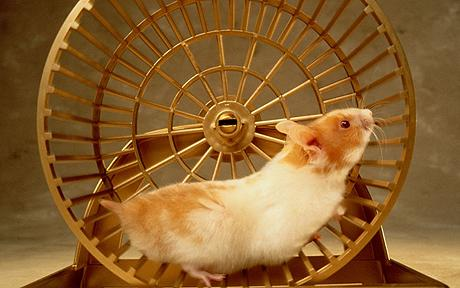 hamster_RUEDA