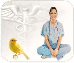 Enfermedades-canarios-especies