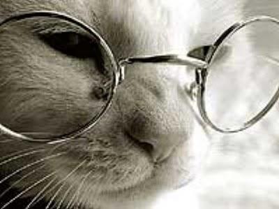 ArchivoCurso-gratis-Cuidado-Crianza-Gatos.jpg