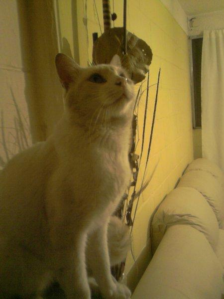 Elegancia en los Gatos